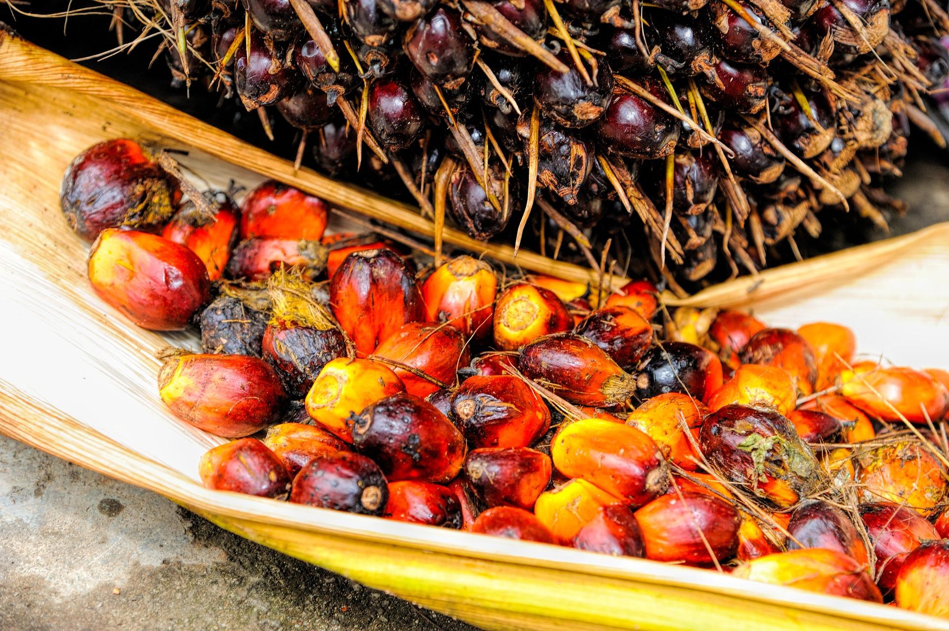 Pravda o palmovom oleji