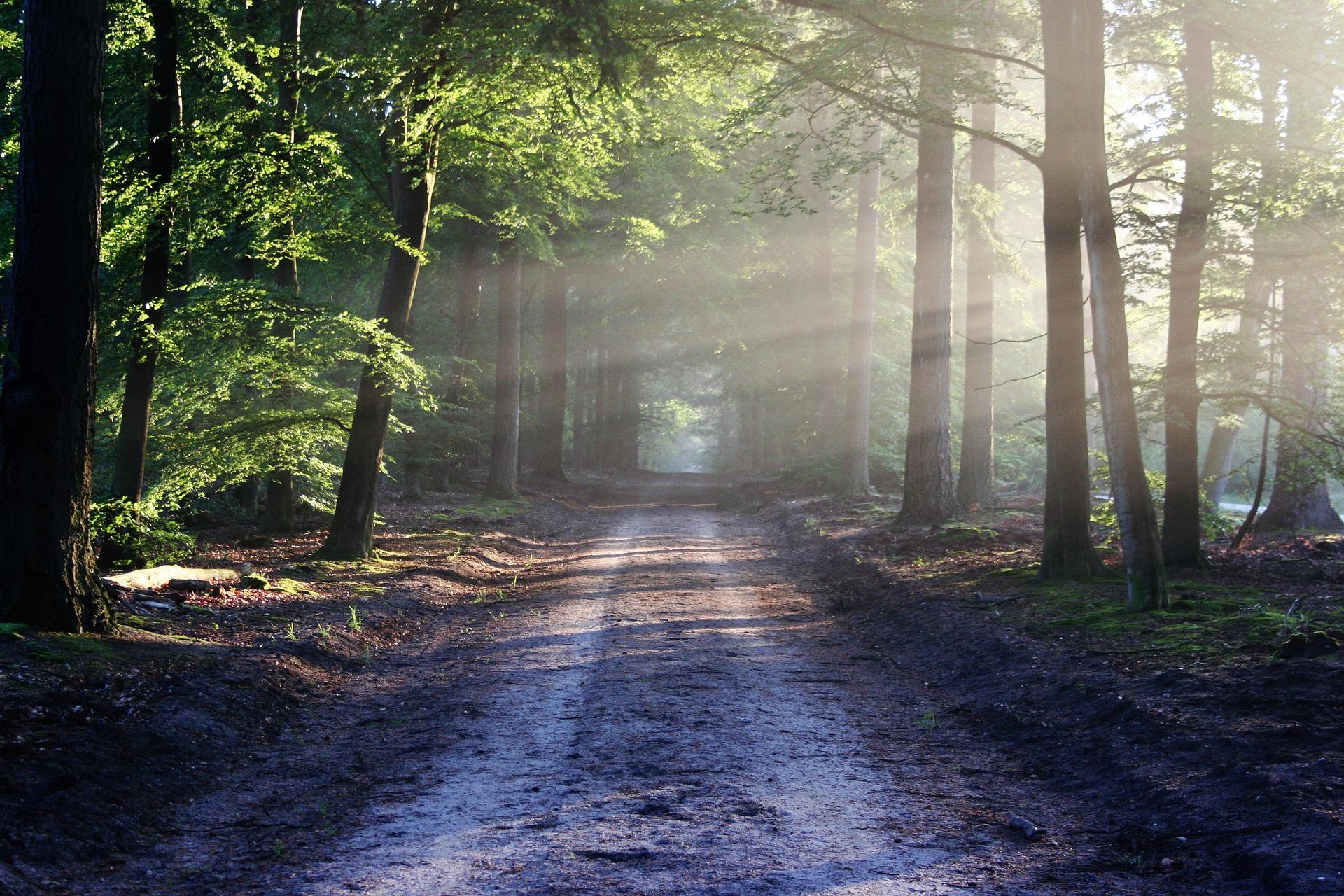 10 jednoduchých vecí čo môžeš urobiť pre životné prostredie