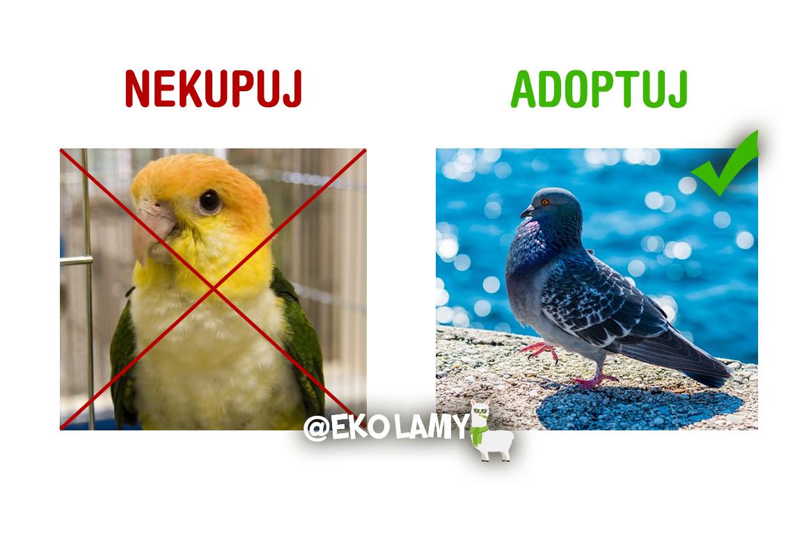 Nekupuj adoptuj